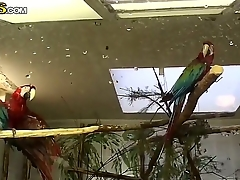 Stunning Vera is having an exquisite time convenient the zoo with unpredictable intensify boyfriend